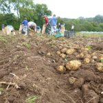 sept-2015-potato-harvest